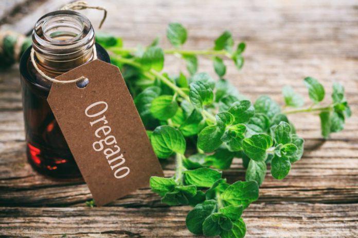Jak działa olejek z oregano?
